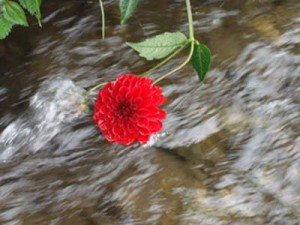 फूलको थुँगा बहेर गयो……..